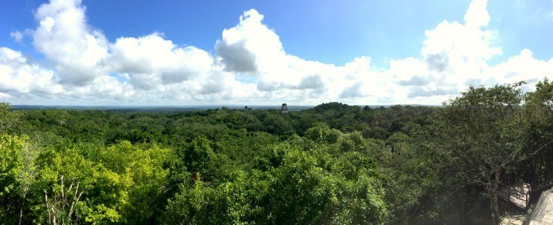 Tikal with kids: The view from the top of Temple IV