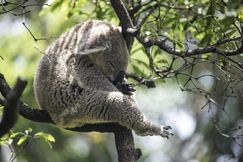 Best animal experiences in Melbourne