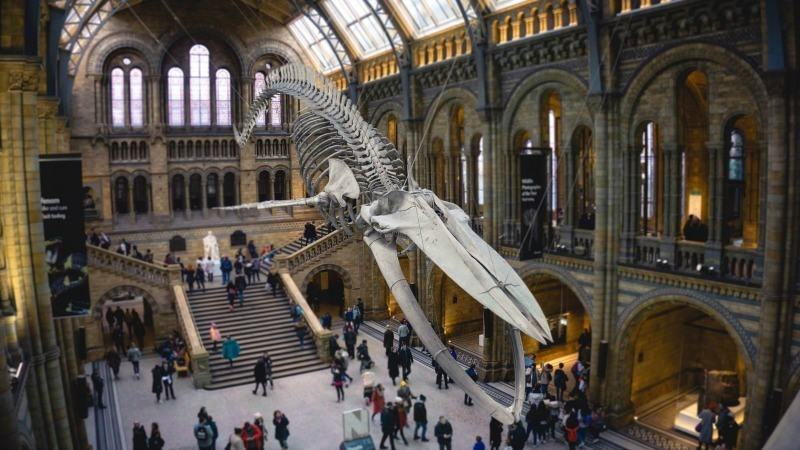 UK days out and Gift experiences for kids