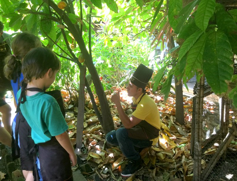 Nicaragua with kids: Choco Museo, Granada: An introduction to the cacao tree.
