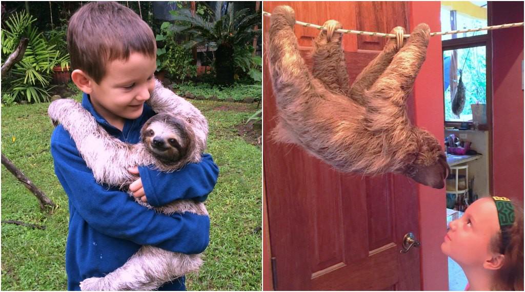 El Valle Sloths