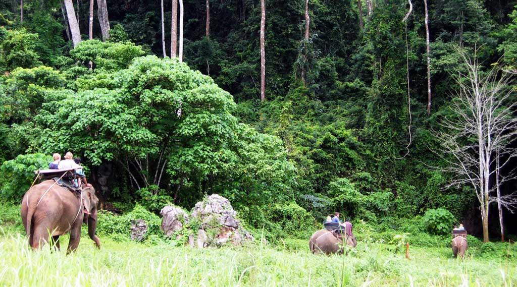Elephants-Khao-Sok-National-Park