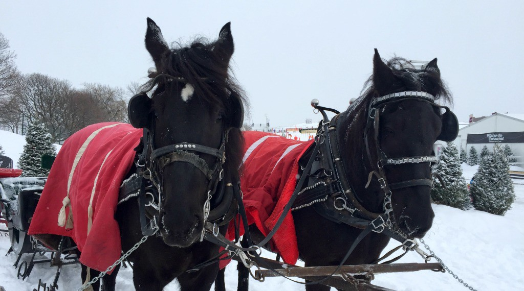 Image of horses at the Quebec Winter Carnival
