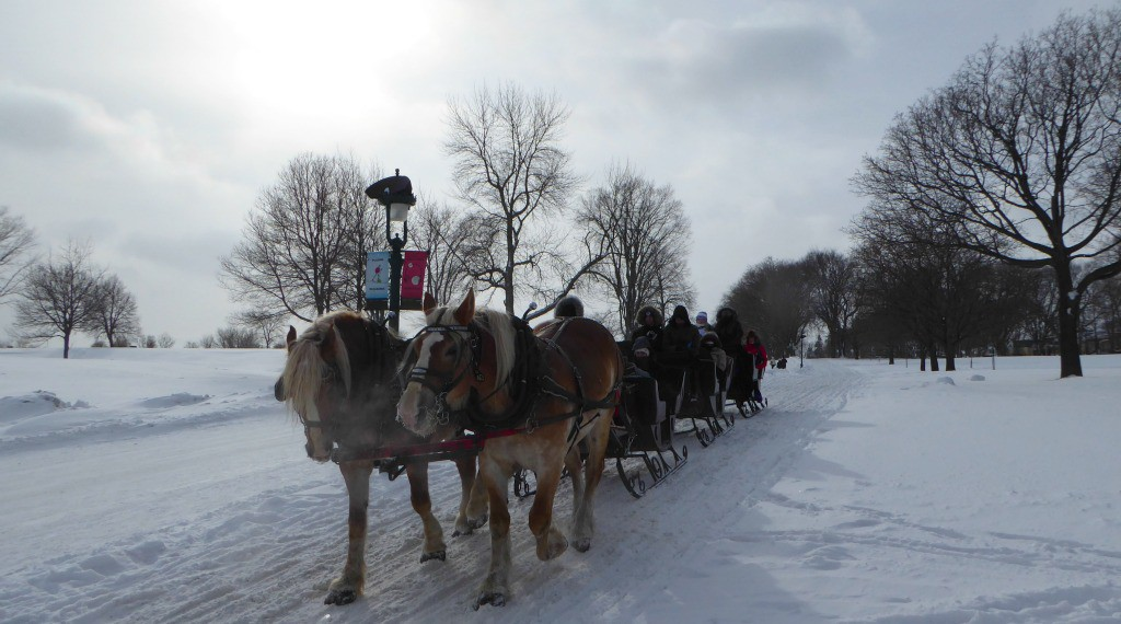Image of horse drawn sleigh at the Quebec Winter Carnival