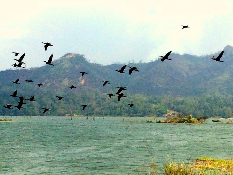 lake-bayano-birds