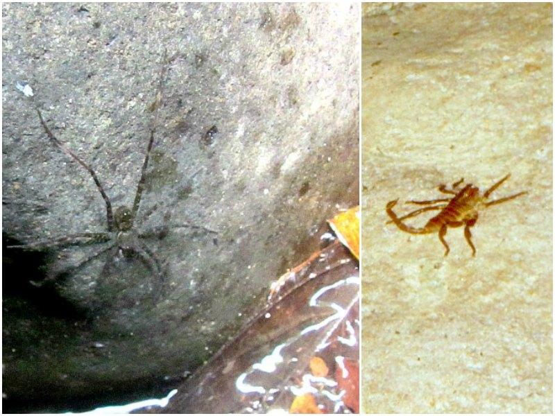 Panama snake adventure: Spiders and scorpions