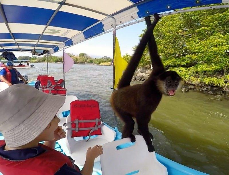 Granada with kids, Nicaragua: a monkey at Las Isletas, Granada