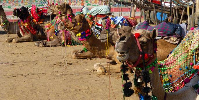 The Pushkar Camel Fair