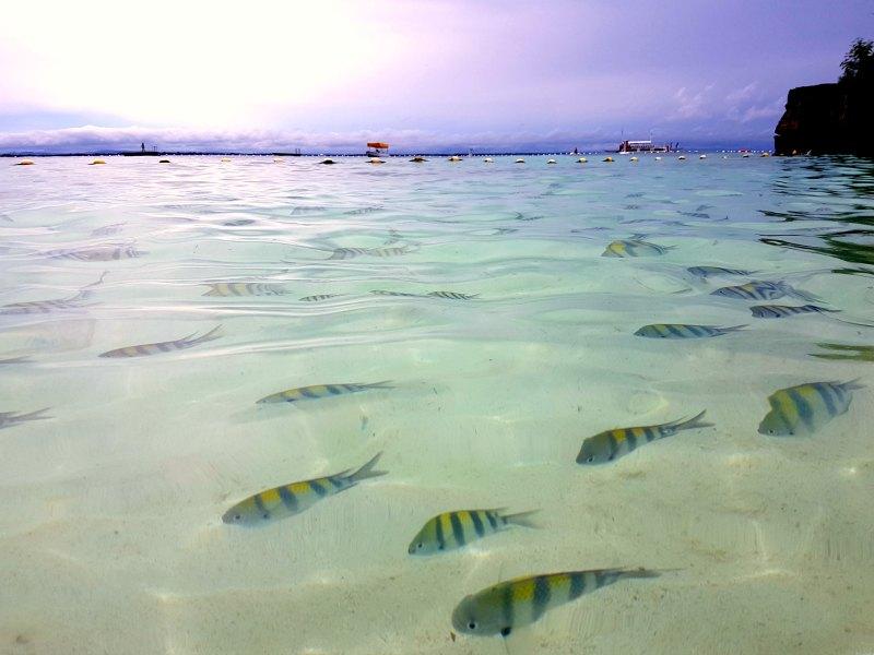 Shagrila Cebu sea fish