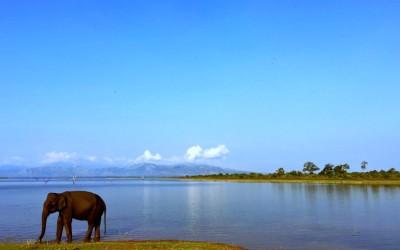My Family Adventure: Safaris & Sigiriya in Sri Lanka