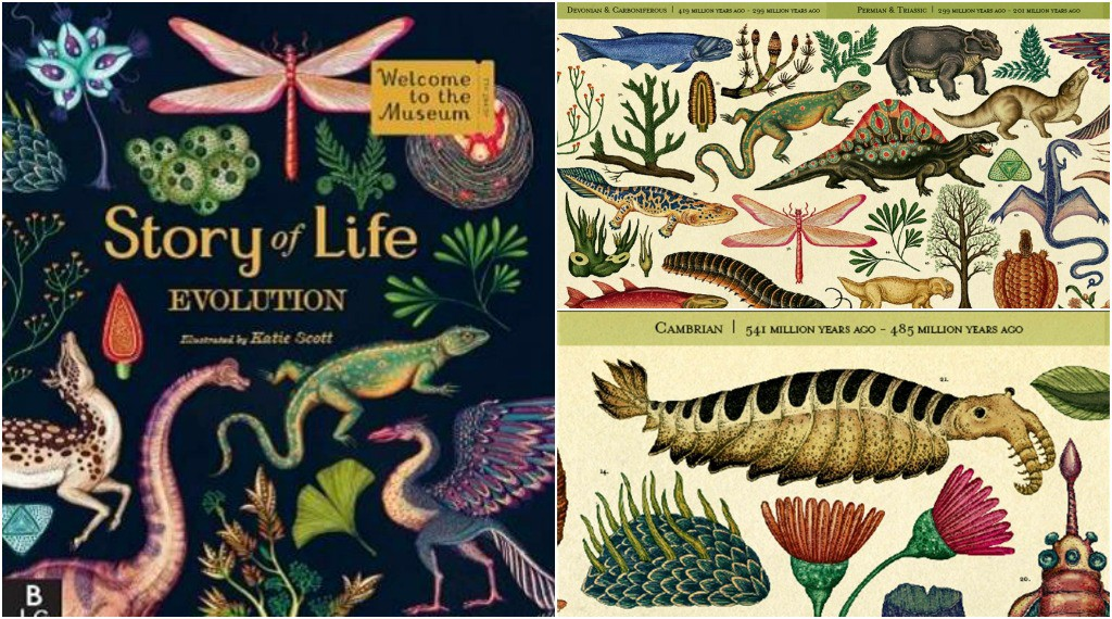 Best Books for Children Story of Life: Evolution (Welcome to the Museum) by Katie Scott