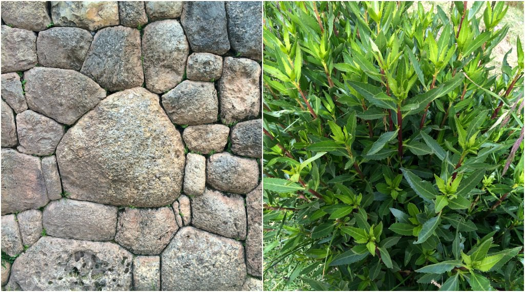 (Left) Pucapucara: I spy a flower! (Right) The leaves used to make muña tea