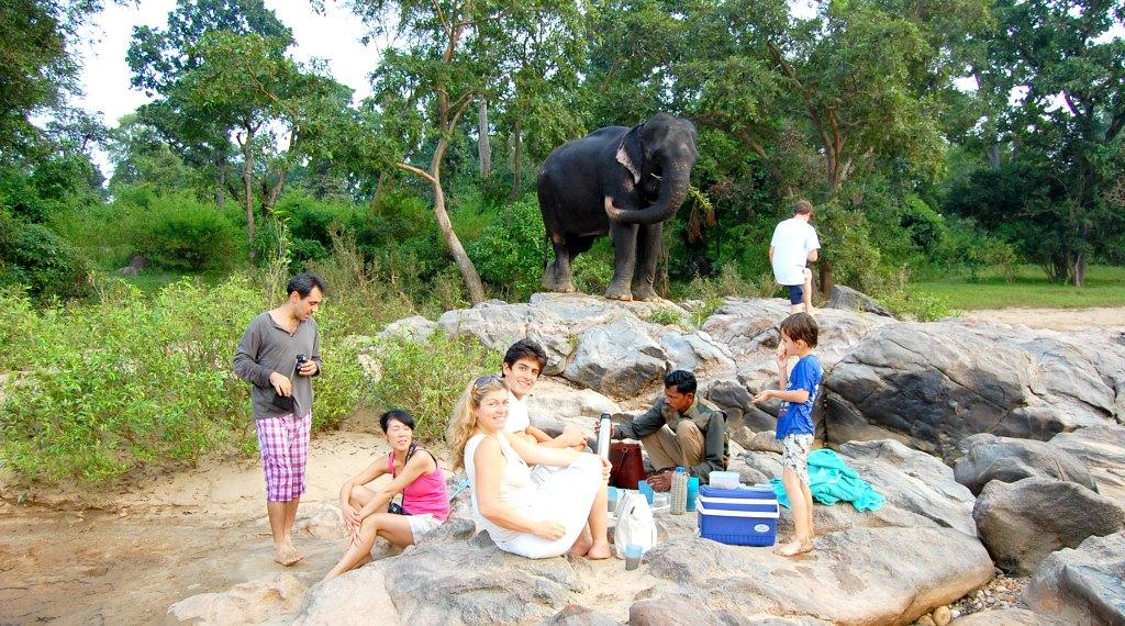 Tara the elephant