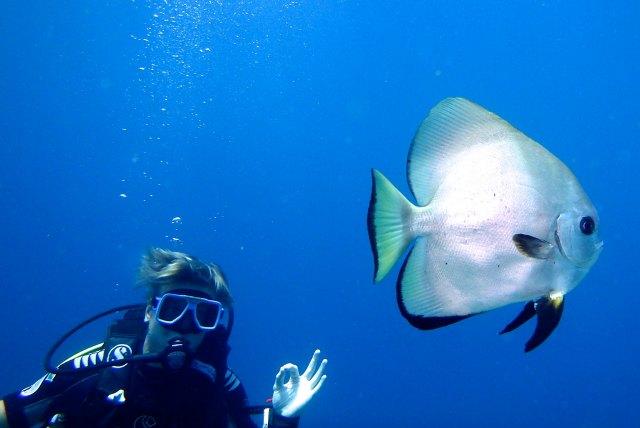 Club paradise diving