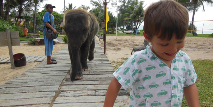 elephantmarriott