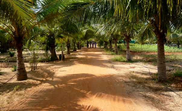 The Dune Family Friendly HOtels India